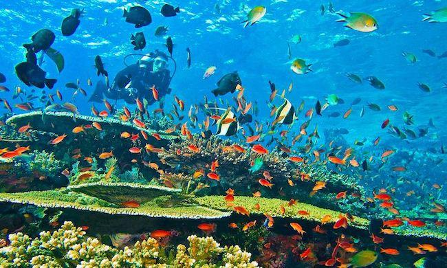 diving padar island komodo