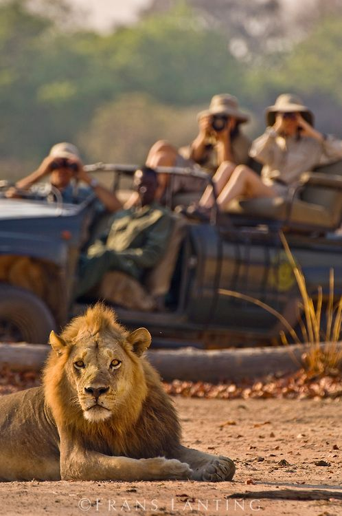 How to Enjoy Wildlife Travel Without Causing Troubles