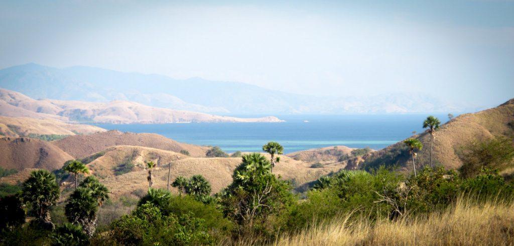 Komodo Rinca Tour, Easy Way to Explore Komodo Habitat