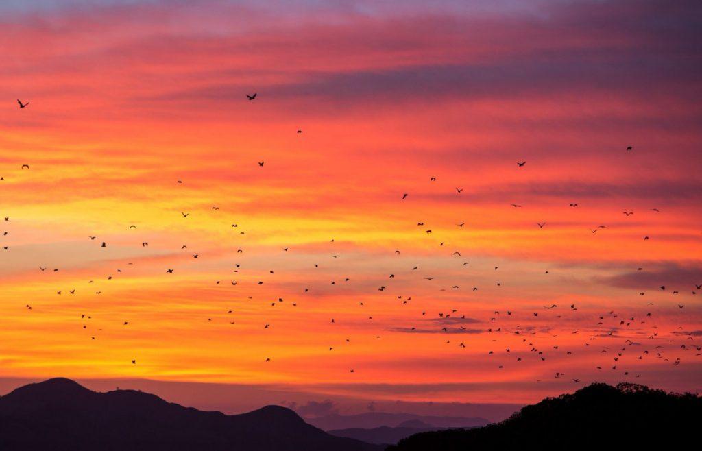 kalong island - sunset with thousand bat - open trip labuan bajo