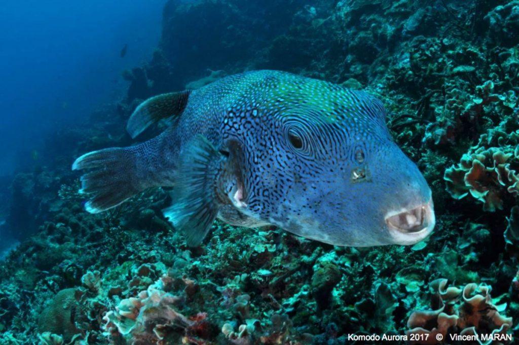 A Chance to Explore More Remote Bali Dive Sites